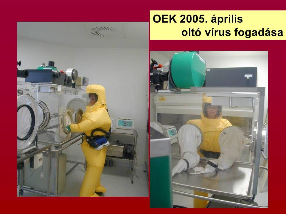 OEK 2005. április oltó vírus fogadása
