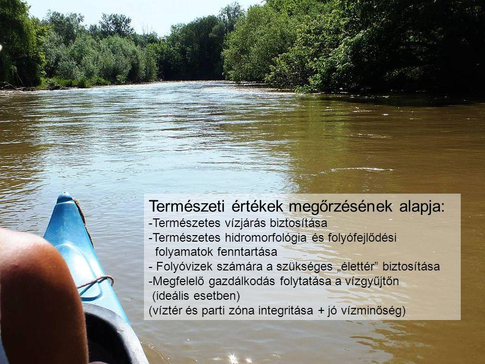"""Természeti értékek megőrzésének alapja: -Természetes vízjárás biztosítása -Természetes hidromorfológia és folyófejlődési folyamatok fenntartása - Folyóvizek számára a szükséges """"élettér biztosítása -Megfelelő gazdálkodás folytatása a vízgyűjtőn (ideális esetben) (víztér és parti zóna integritása + jó vízminőség)"""