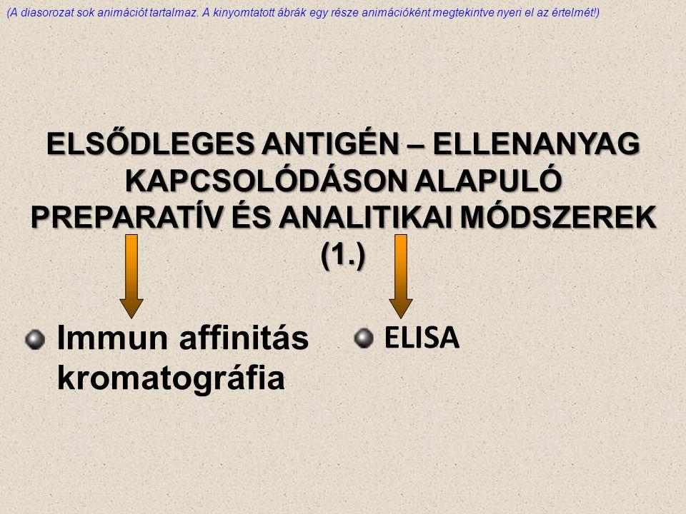 ELSŐDLEGES ANTIGÉN – ELLENANYAG KAPCSOLÓDÁSON ALAPULÓ PREPARATÍV ÉS ANALITIKAI MÓDSZEREK (1.) Immun affinitás kromatográfia ELISA (A diasorozat sok animációt tartalmaz.