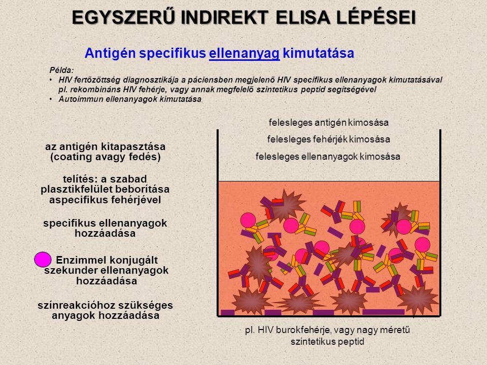 EGYSZERŰ INDIREKT ELISA LÉPÉSEI Antigén specifikus ellenanyag kimutatása az antigén kitapasztása (coating avagy fedés) felesleges antigén kimosása telítés: a szabad plasztikfelület beborítása aspecifikus fehérjével felesleges fehérjék kimosása specifikus ellenanyagok hozzáadása felesleges ellenanyagok kimosása színreakcióhoz szükséges anyagok hozzáadása Példa: HIV fertőzöttség diagnosztikája a páciensben megjelenő HIV specifikus ellenanyagok kimutatásával pl.