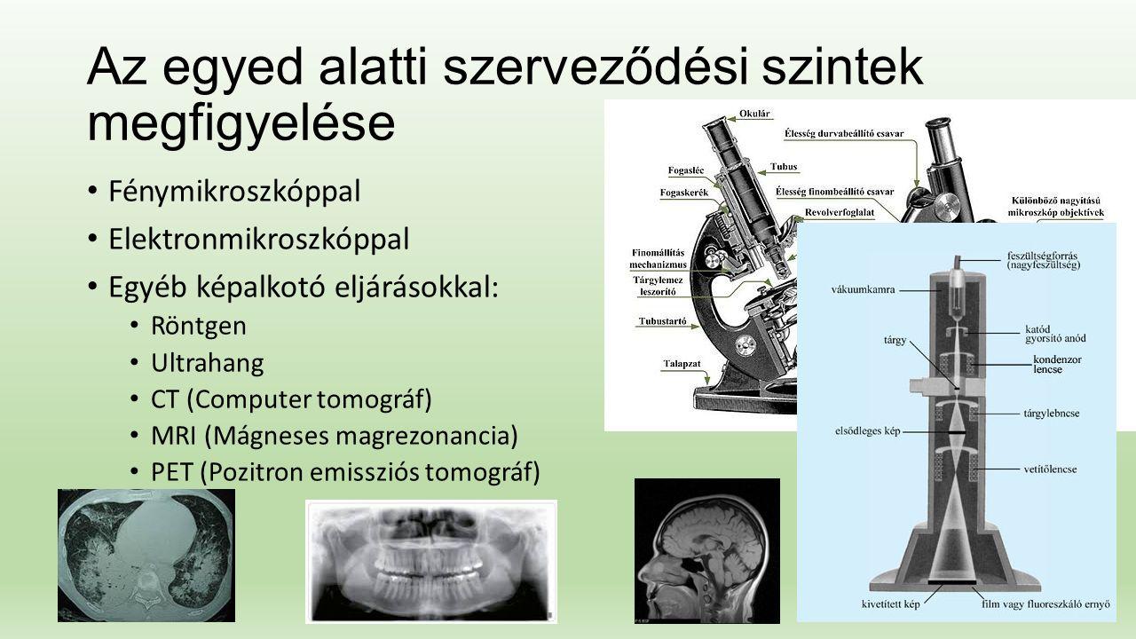 Az egyed alatti szerveződési szintek megfigyelése Fénymikroszkóppal Elektronmikroszkóppal Egyéb képalkotó eljárásokkal: Röntgen Ultrahang CT (Computer