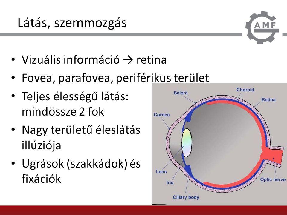 Látás, szemmozgás Vizuális információ → retina Fovea, parafovea, periférikus terület Teljes élességű látás: mindössze 2 fok Nagy területű éleslátás il