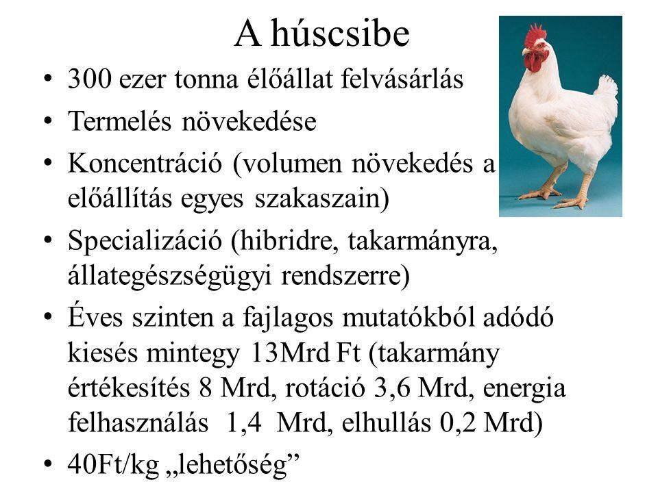 A húscsibe 300 ezer tonna élőállat felvásárlás Termelés növekedése Koncentráció (volumen növekedés a termék- előállítás egyes szakaszain) Specializáci