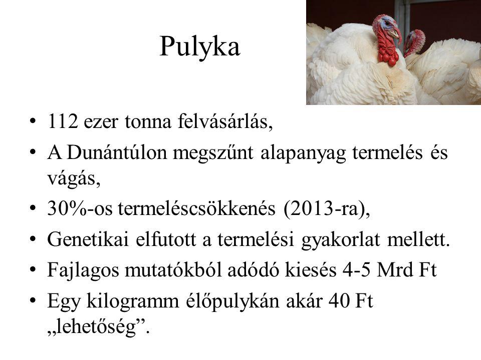 Pulyka 112 ezer tonna felvásárlás, A Dunántúlon megszűnt alapanyag termelés és vágás, 30%-os termeléscsökkenés (2013-ra), Genetikai elfutott a termelési gyakorlat mellett.
