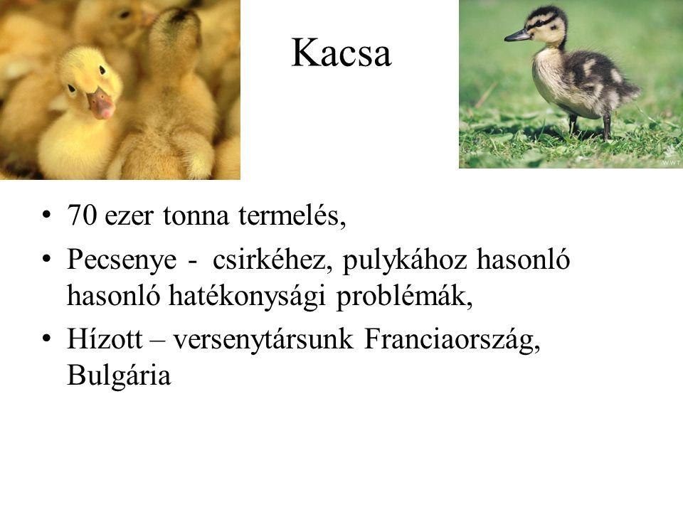 Kacsa 70 ezer tonna termelés, Pecsenye - csirkéhez, pulykához hasonló hasonló hatékonysági problémák, Hízott – versenytársunk Franciaország, Bulgária