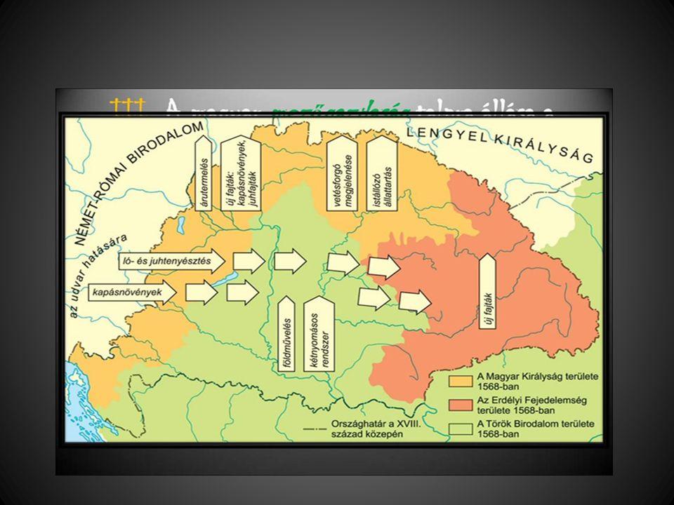 A gazdaság fellendülése A volt Királyi Mo.: mintagazdaságok, majorsági gazdálkodás, fajtaváltás, istállózó állattartás, magas jobbágyterhek -export az örökös tartományokba A volt Hódoltság: a kétnyomásos rendszer is fejlődés; rideg állattenyésztés, alacsony jobbágyterhek Erdély: a nyugati piacok távol vannak; regionális központ keleti viszonylatban A céhes ipar éled fel, a század végén manufaktúrák A kettős vámhatár-rendelet (1754): merkantilizmus