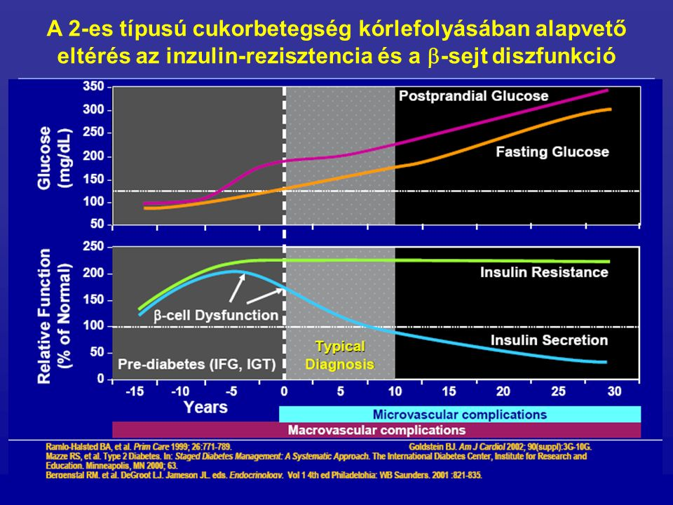 A 2-es típusú cukorbetegség kórlefolyásában alapvető eltérés az inzulin-rezisztencia és a  -sejt diszfunkció