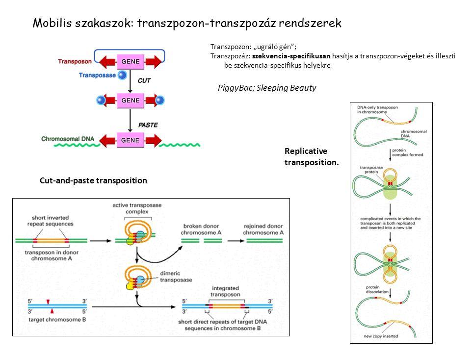 Feltételes gén-expressziós modellek I.