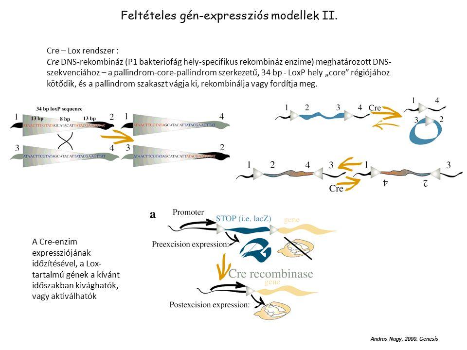 """DNS bejuttatása a sejtmembránon át Ca-foszfát, lipidamin-anyag, liposzóma dendromerek, poli-kationons polimerek (PEI, PAMAM, stb) Replkációra képtelen hordozó Virus (pl, lenti, adeno, stb) mikro-injekció elektroporáció """"génpuska http://www.flemingtonlab.com/Protocols/CalciumPhosphateTransf.pdf Ca-foszfát Nagy-szemcséjű DNS-CA 2+ csapadék; internalizált szemcsék 2-12 óra múlva; Tápcsere!!."""