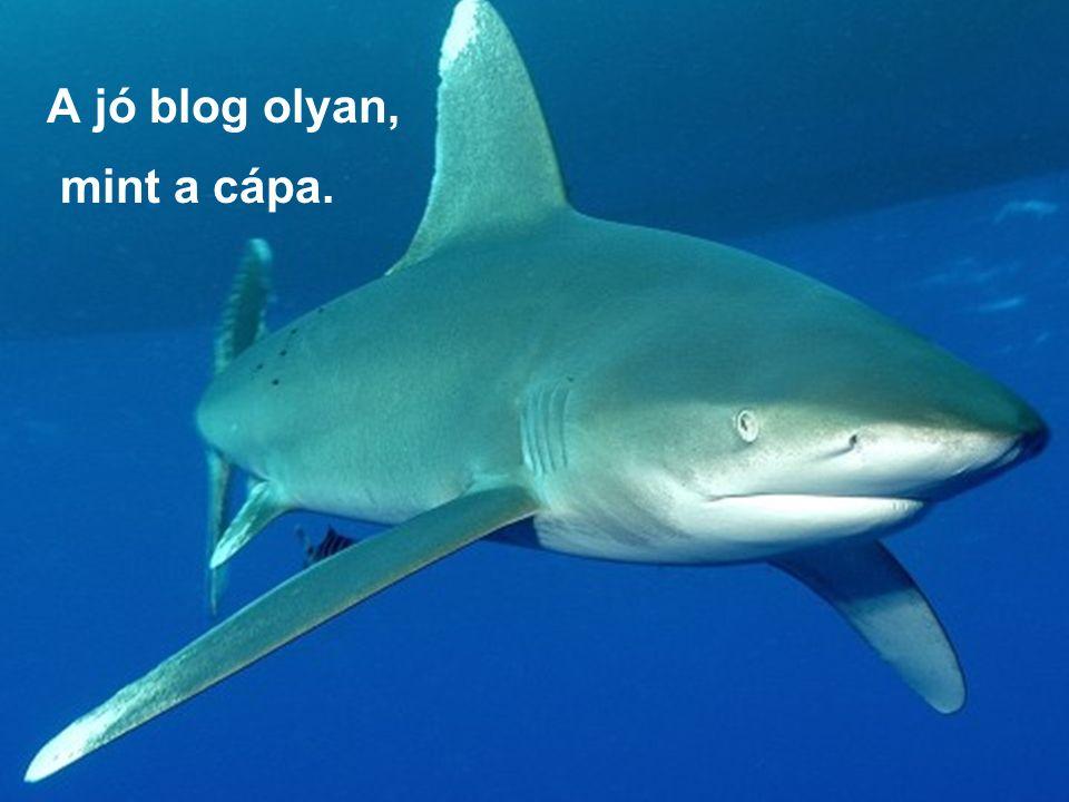 A jó blog olyan, mint a cápa.