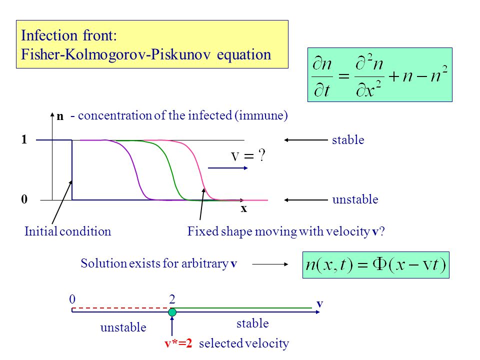 FKP equation: Instability at small velocities Initial condition x n 1 0 Fixed shape Solution exists for arbitrary v v - friction v (friction) smalloscillations around 0 unphysical (n<0) 10