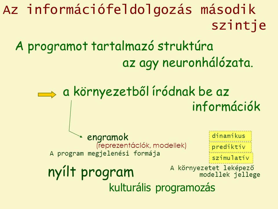 Az információfeldolgozás második szintje A programot tartalmazó struktúra az agy neuronhálózata.