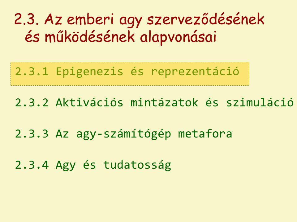 2.3.1 Epigenezis és reprezentáció 2.3.2 Aktivációs mintázatok és szimuláció 2.3.3 Az agy-számítógép metafora 2.3.4 Agy és tudatosság 2.3.