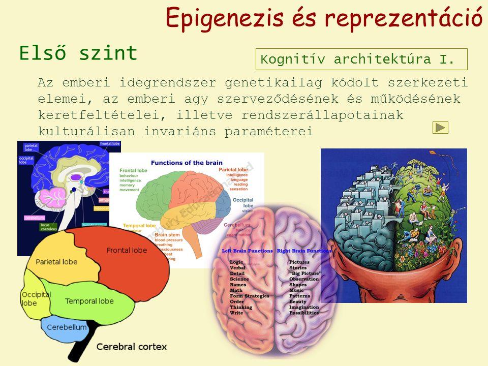 """Epigenezis és reprezentáció Első szint Második szint Az emberi idegrendszer genetikailag kódolt szerkezeti elemei, az emberi agy szerveződésének és működésének keretfeltételei, illetve rendszerállapotainak kulturálisan invariáns paraméterei Az adott korra jellemző """"életvilág , a mindenkori """"kognitív habitus lenyomata, az információfeldolgozás individuális különbségeinek alaprétege, a megismerés kulturálisan kialakult """"állványzata Kognitív architektúra I."""