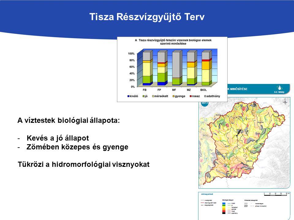 Tisza Részvízgyűjtő Terv A víztestek biológiai állapota: -Kevés a jó állapot -Zömében közepes és gyenge Tükrözi a hidromorfológiai visznyokat