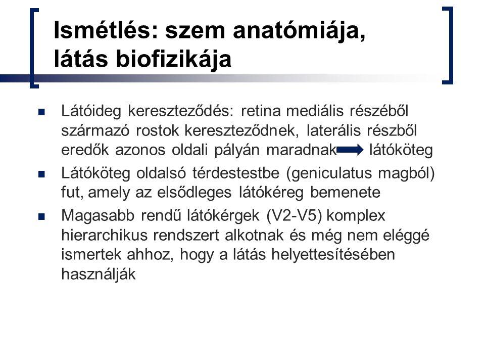 Ismétlés: szem anatómiája, látás biofizikája Látóideg kereszteződés: retina mediális részéből származó rostok kereszteződnek, laterális részből eredők