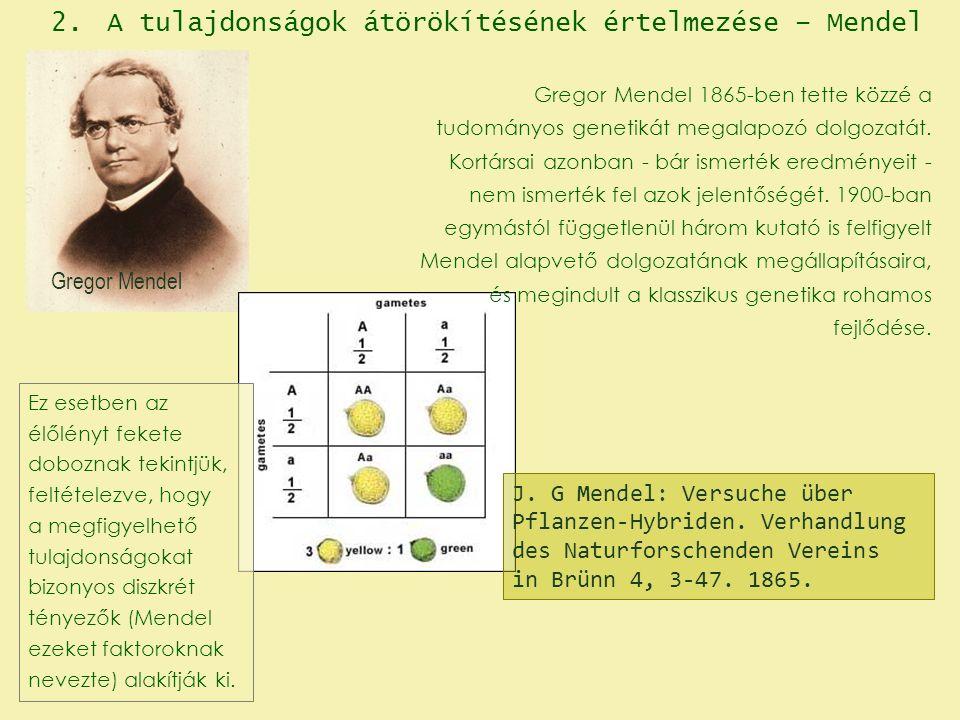 Gregor Mendel J. G Mendel: Versuche über Pflanzen-Hybriden.