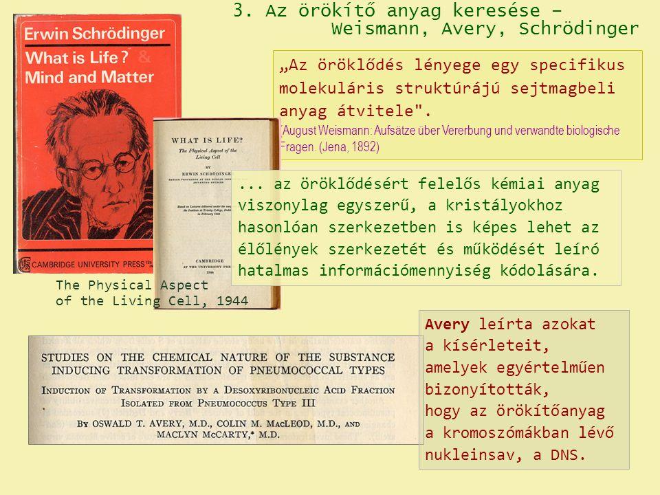 """3. Az örökítő anyag keresése – Weismann, Avery, Schrödinger """"Az öröklődés lényege egy specifikus molekuláris struktúrájú sejtmagbeli anyag átvitele"""