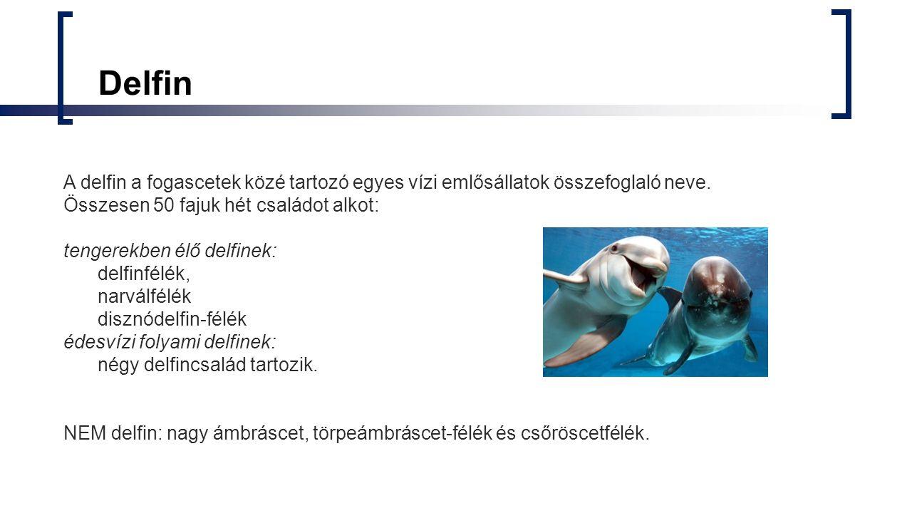 Delfinek Delfinfélék:  Kardszárnyú delfinek  Gömbölyűfejű delfinek  Közönséges delfinek  Simahátú delfinek  Púpos delfinek  Hosszúcsőrű delfinek  Palackorrú delfinek  Fekete-fehér delfinek  Rövidcsőrű delfinek