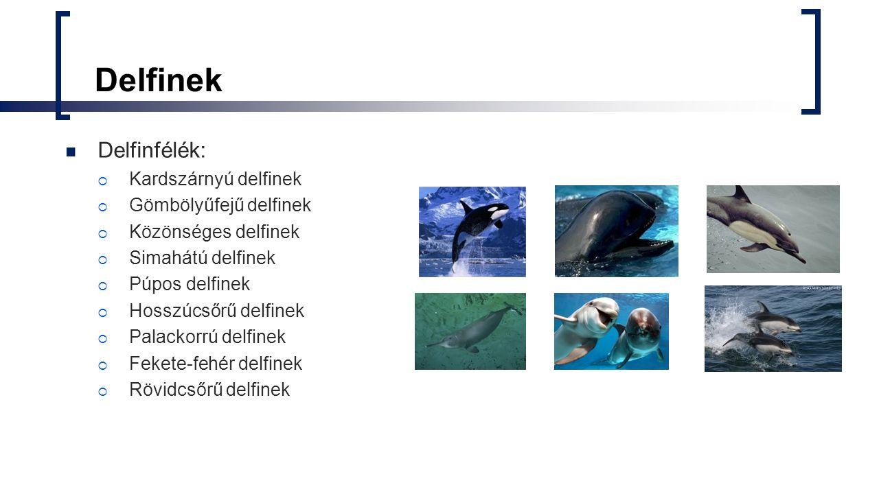 Ultrahangos lokátor A delfinek másodpercenként akár 800 irányított hangot is kibocsátanak a fejük elülső részén található képződményen keresztül.