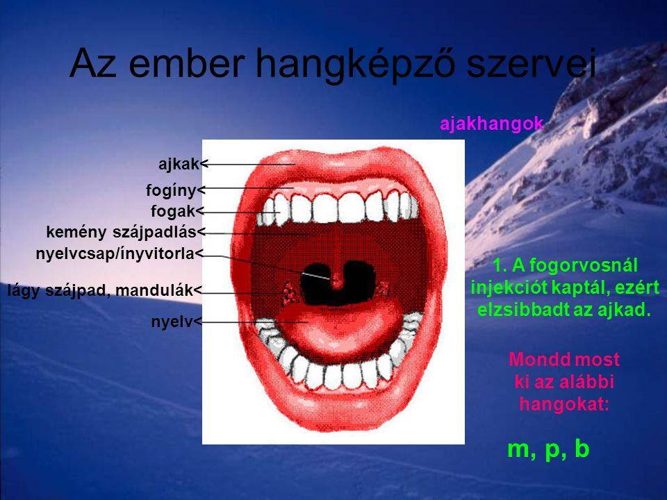 Az ember hangképző szervei ajkak< fogíny< fogak< kemény szájpadlás< nyelvcsap/ínyvitorla< lágy szájpad, mandulák< nyelv< 1. A fogorvosnál injekciót ka