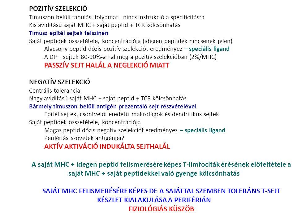 POZITÍV SZELEKCIÓ Tímuszon belüli tanulási folyamat - nincs instrukció a specificitásra Kis aviditású saját MHC + saját peptid + TCR kölcsönhatás Tímu