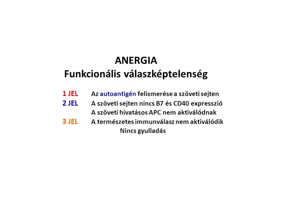 ANERGIA Funkcionális válaszképtelenség 1 JEL Az autoantigén felismerése a szöveti sejten 2 JEL A szöveti sejten nincs B7 és CD40 expresszió A szöveti hivatásos APC nem aktiválódnak 3 JEL A természetes immunválasz nem aktiválódik Nincs gyulladás