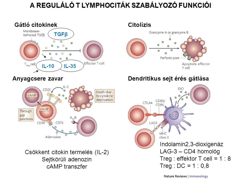 A REGULÁLÓ T LYMPHOCITÁK SZABÁLYOZÓ FUNKCIÓI IL-35 Gátló citokinek TGFβIL-10 Citolízis Anyagcsere zavarDendritikus sejt érés gátlása Csökkent citokin termelés (IL-2) Sejtkörüli adenozin cAMP transzfer Indolamin2,3-dioxigenáz LAG-3 – CD4 homológ Treg : effektor T cell = 1 : 8 Treg : DC = 1 : 0,8