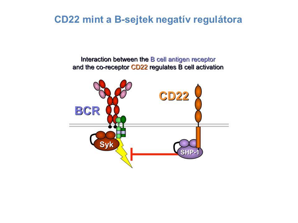 CD22 mint a B-sejtek negatív regulátora