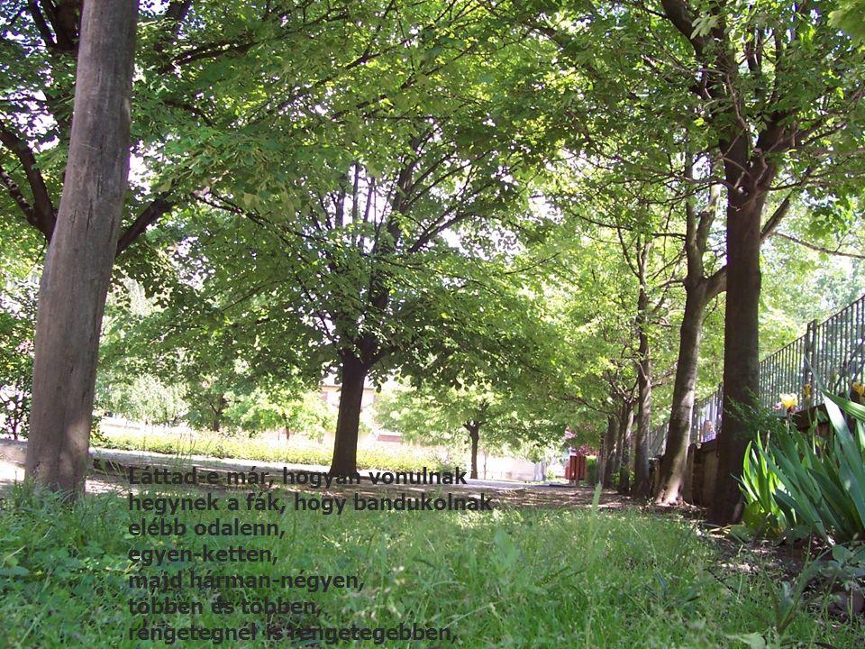 Láttad-e már, hogyan vonulnak hegynek a fák, hogy bandukolnak elébb odalenn, egyen-ketten, majd hárman-négyen, többen és többen, rengetegnél is rengetegebben,