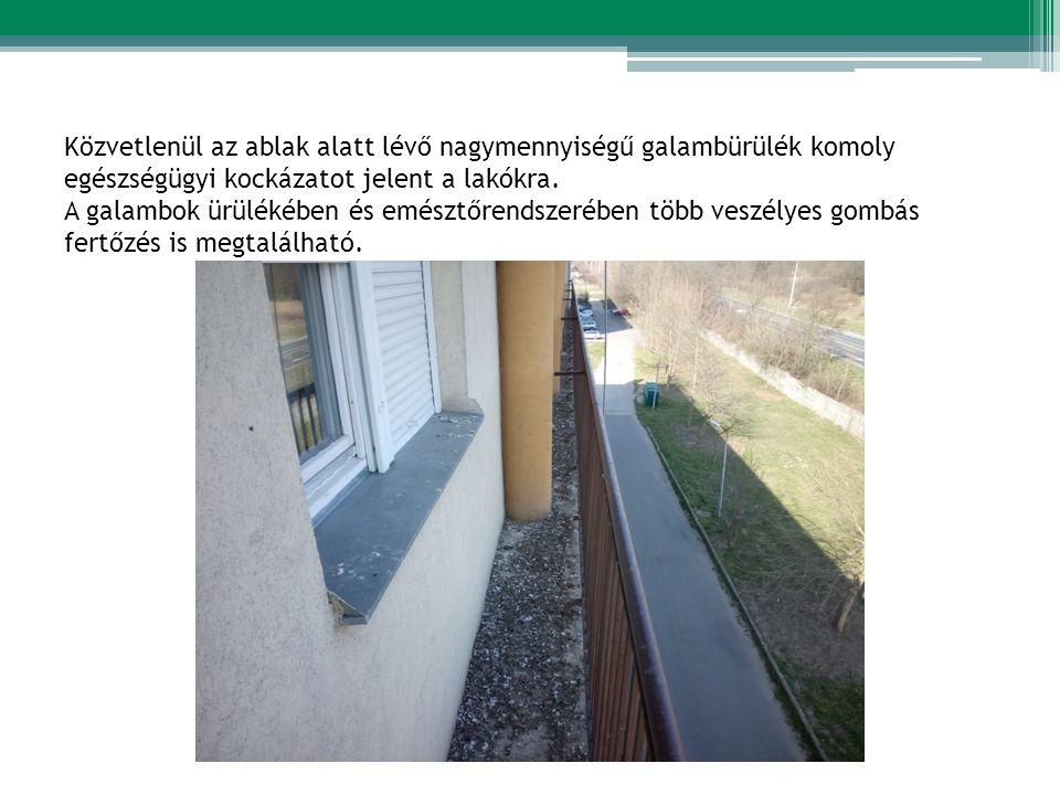 Közvetlenül az ablak alatt lévő nagymennyiségű galambürülék komoly egészségügyi kockázatot jelent a lakókra.