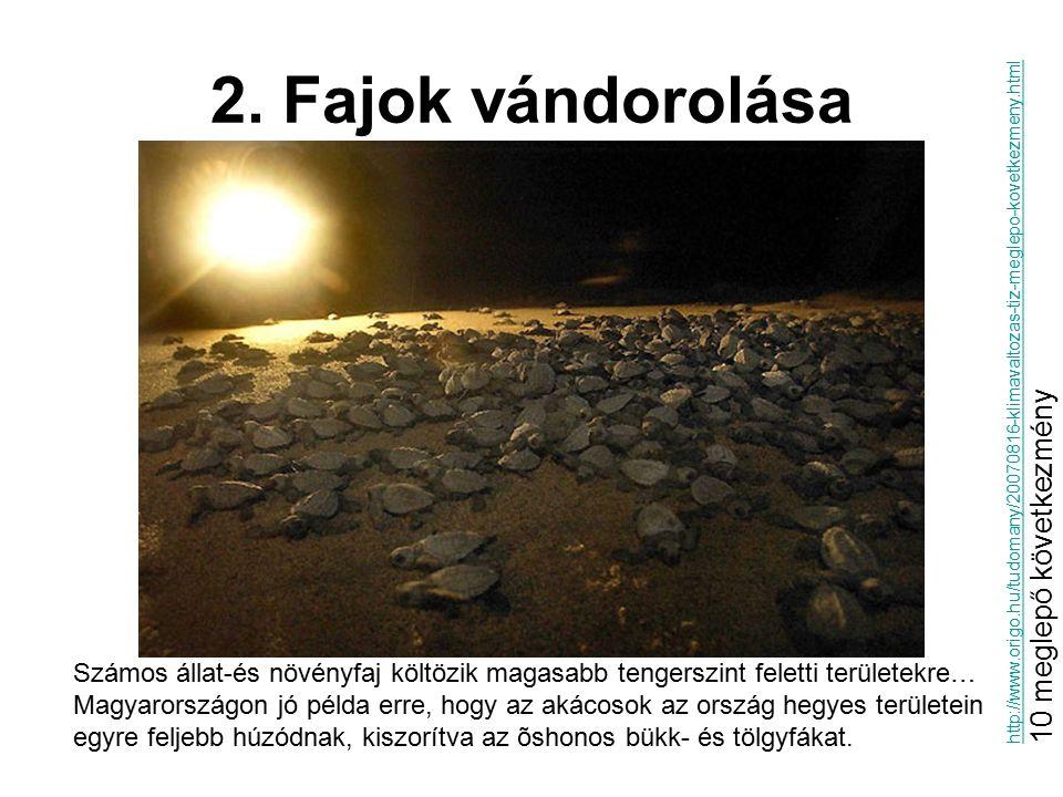 2. Fajok vándorolása Számos állat-és növényfaj költözik magasabb tengerszint feletti területekre… Magyarországon jó példa erre, hogy az akácosok az or