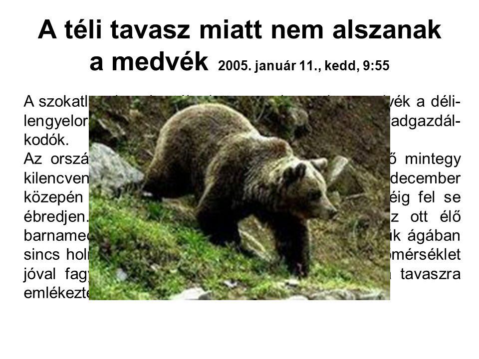 A téli tavasz miatt nem alszanak a medvék 2005. január 11., kedd, 9:55 A szokatlanul enyhe tél miatt nem alszanak a medvék a déli- lengyelországi Kárp