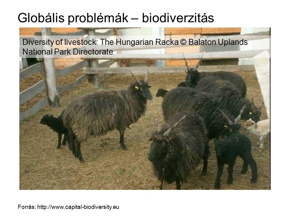 Globális problémák – biodiverzitás Forrás: http://www.capital-biodiversity.eu Diversity of livestock: The Hungarian Racka © Balaton Uplands National P