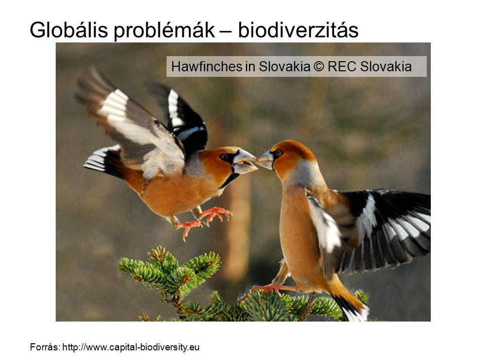 Globális problémák – biodiverzitás Forrás: http://www.capital-biodiversity.eu Hawfinches in Slovakia © REC Slovakia