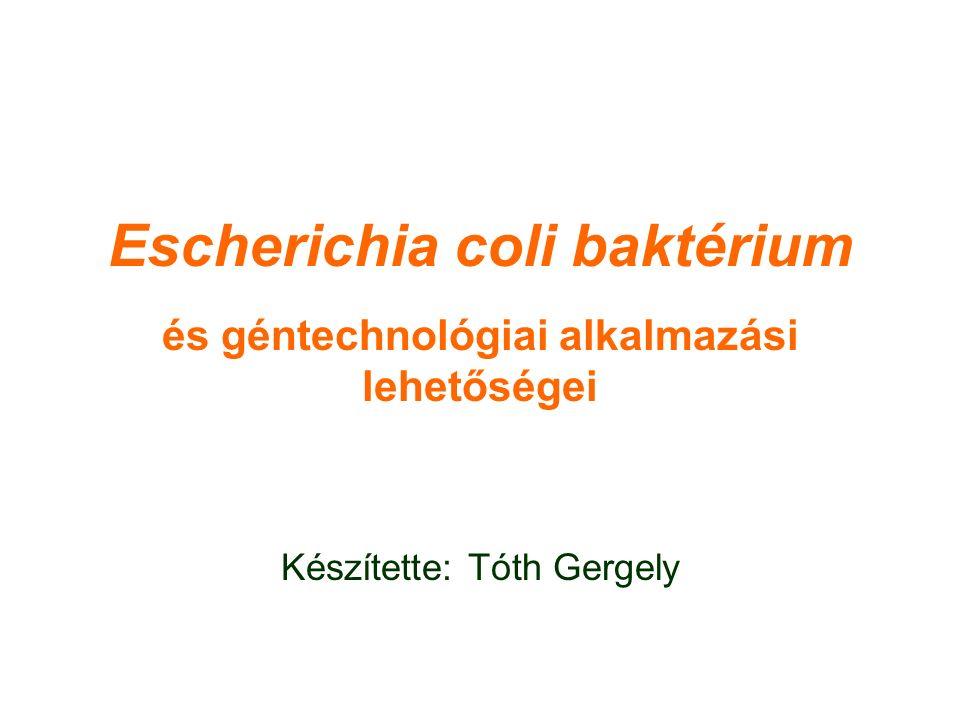 Escherichia coli baktérium és géntechnológiai alkalmazási lehetőségei Készítette: Tóth Gergely