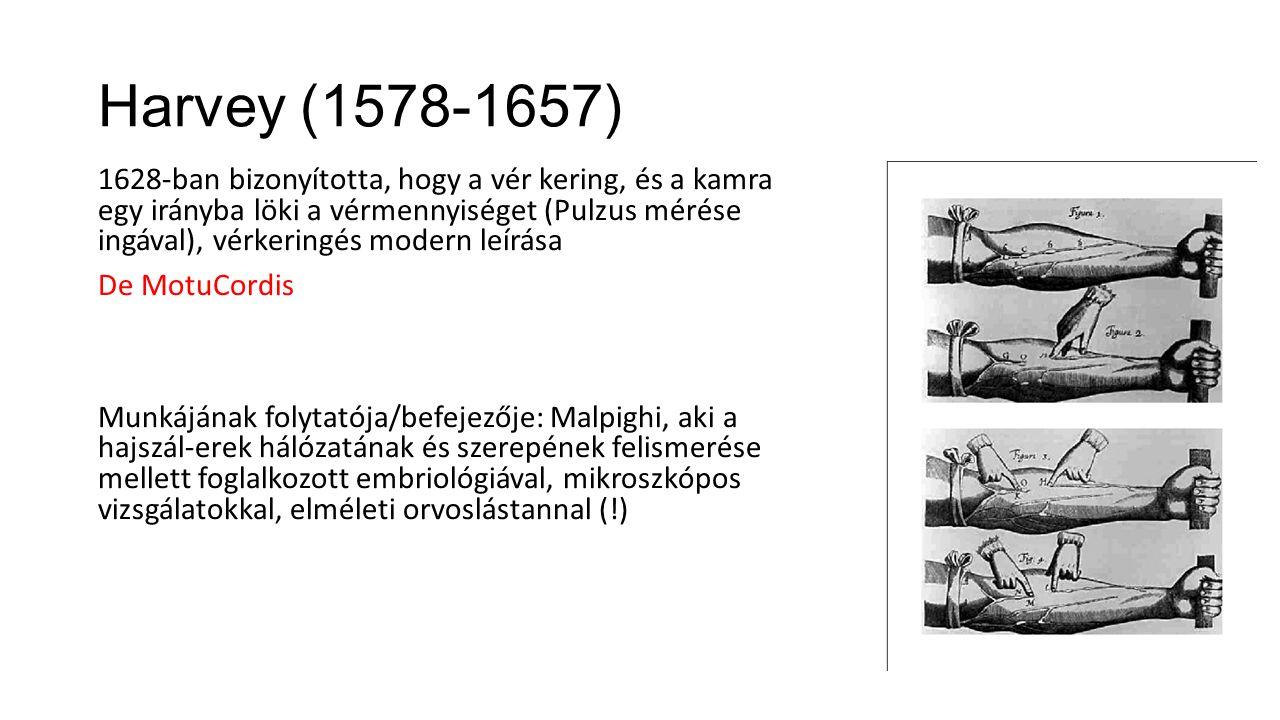 Harvey (1578-1657) 1628-ban bizonyította, hogy a vér kering, és a kamra egy irányba löki a vérmennyiséget (Pulzus mérése ingával), vérkeringés modern leírása De MotuCordis Munkájának folytatója/befejezője: Malpighi, aki a hajszál-erek hálózatának és szerepének felismerése mellett foglalkozott embriológiával, mikroszkópos vizsgálatokkal, elméleti orvoslástannal (!)