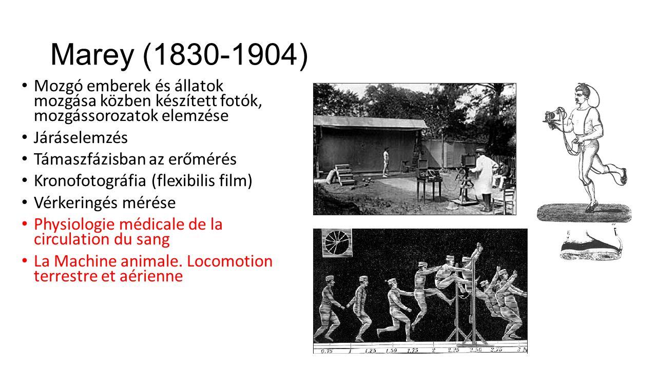 Marey (1830-1904) Mozgó emberek és állatok mozgása közben készített fotók, mozgássorozatok elemzése Járáselemzés Támaszfázisban az erőmérés Kronofotográfia (flexibilis film) Vérkeringés mérése Physiologie médicale de la circulation du sang La Machine animale.