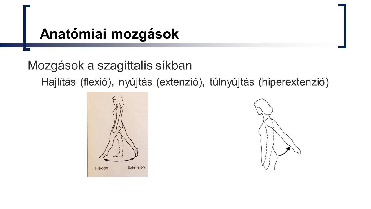 Anatómiai mozgások Mozgások a szagittalis síkban Hajlítás (flexió), nyújtás (extenzió), túlnyújtás (hiperextenzió)