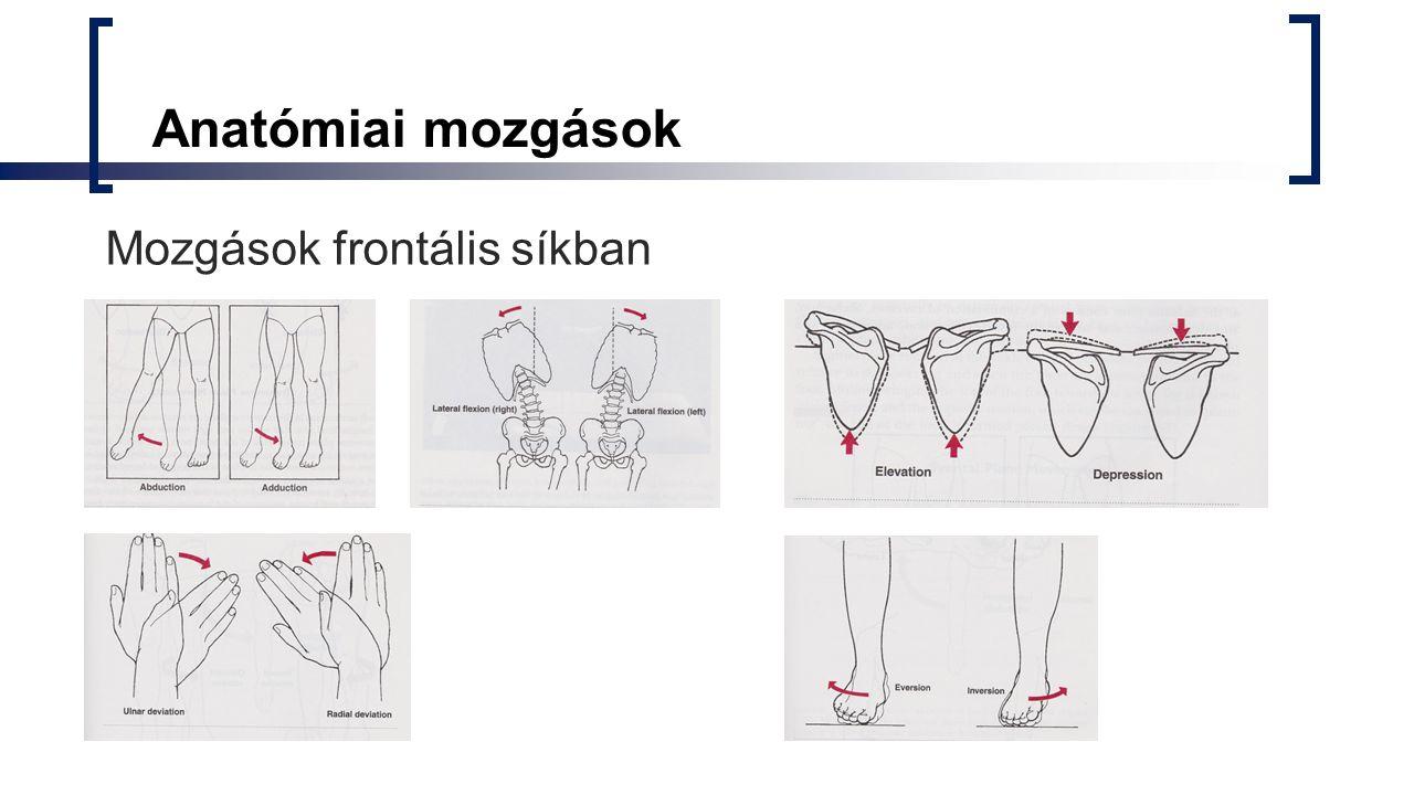 Anatómiai mozgások Mozgások frontális síkban