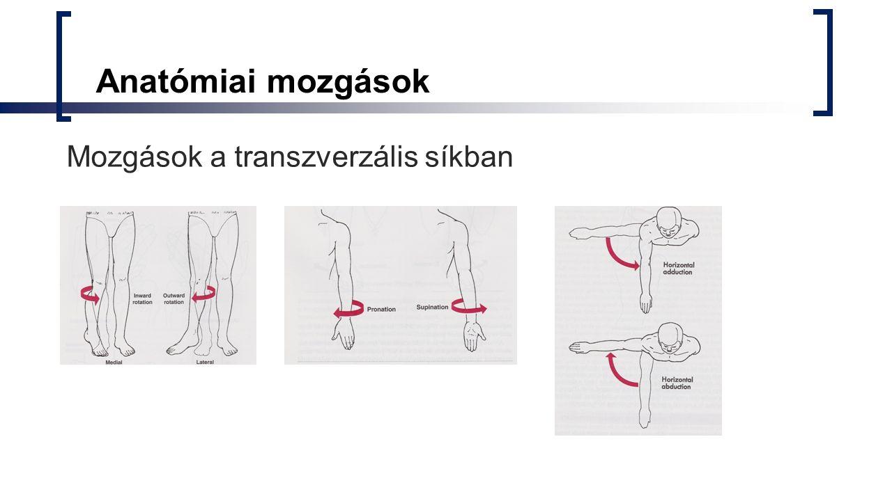 Anatómiai mozgások Mozgások a transzverzális síkban
