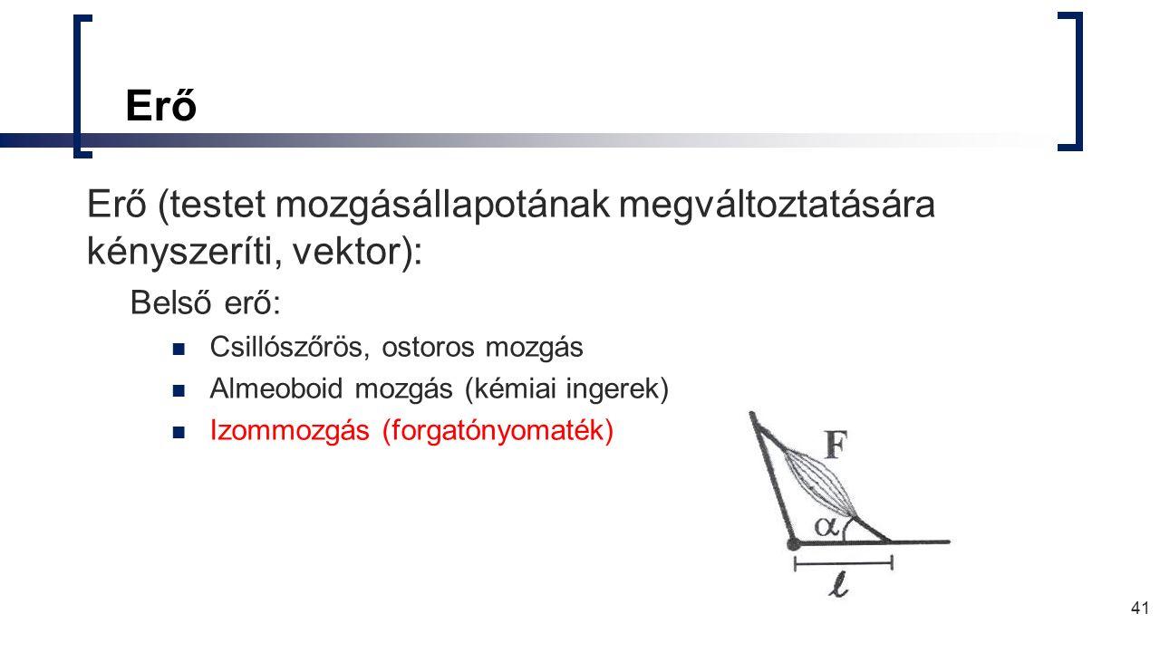 Erő Erő (testet mozgásállapotának megváltoztatására kényszeríti, vektor): Belső erő: Csillószőrös, ostoros mozgás Almeoboid mozgás (kémiai ingerek) Izommozgás (forgatónyomaték) 41