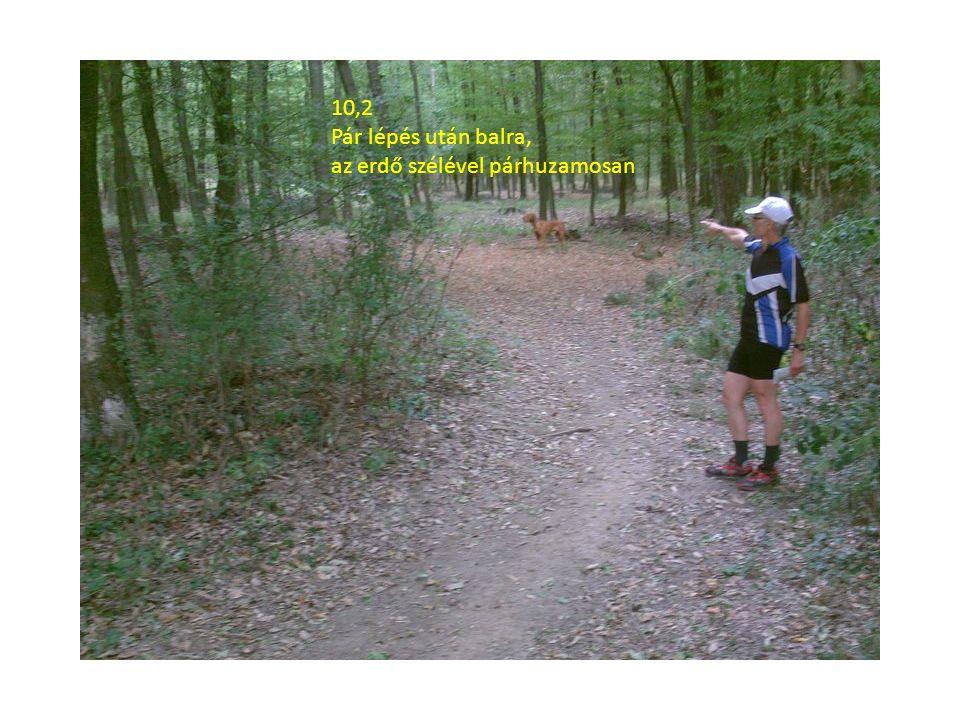10,2 Pár lépés után balra, az erdő szélével párhuzamosan