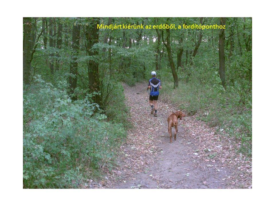 Mindjárt kiérünk az erdőből, a fordítóponthoz