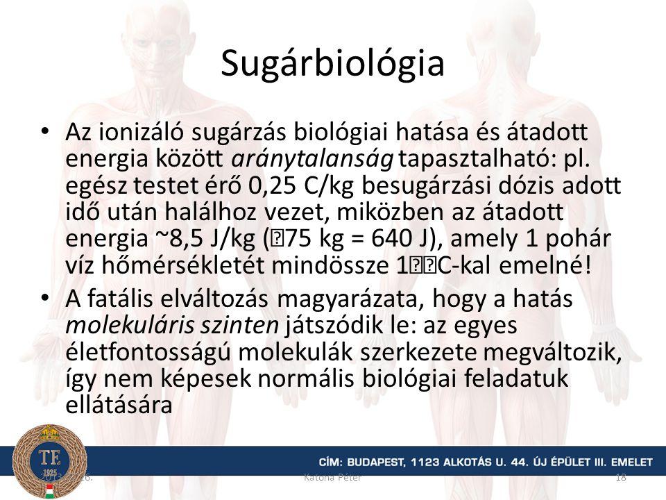 Sugárbiológia Az ionizáló sugárzás biológiai hatása és átadott energia között aránytalanság tapasztalható: pl. egész testet érő 0,25 C/kg besugárzási