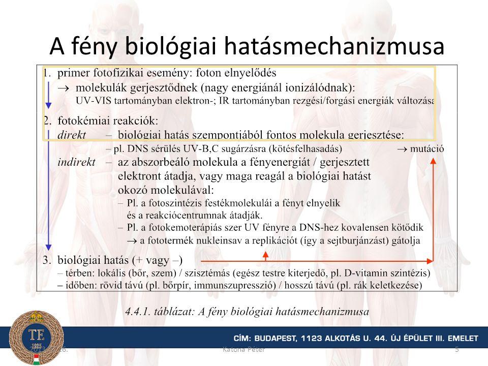 A fény biológiai hatásmechanizmusa 2013.02.26.Katona Péter5