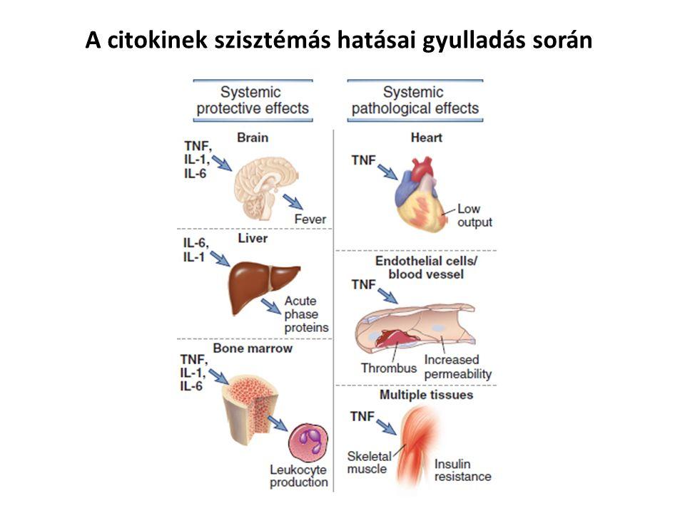 A citokinek szisztémás hatásai gyulladás során