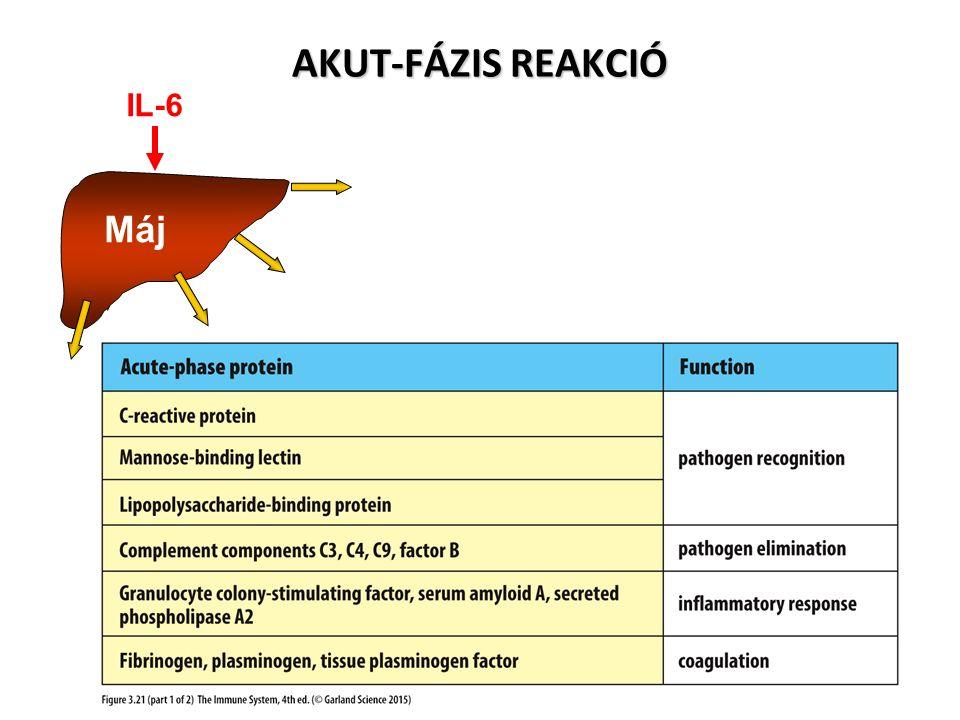 Máj IL-6 AKUT-FÁZIS REAKCIÓ