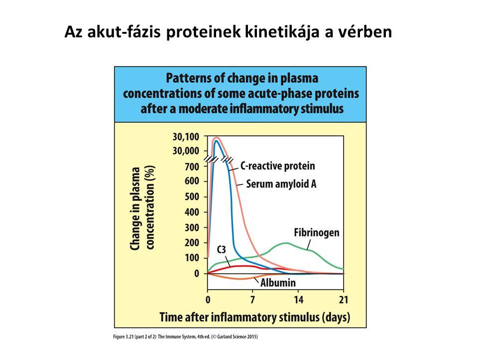 Az akut-fázis proteinek kinetikája a vérben
