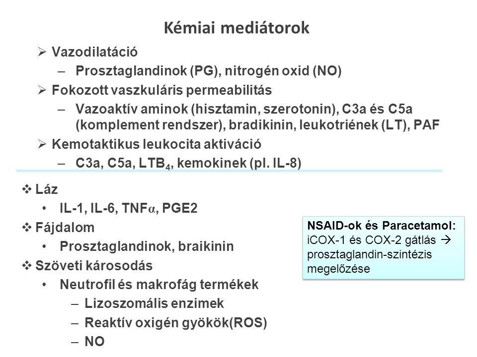  Vazodilatáció –Prosztaglandinok (PG), nitrogén oxid (NO)  Fokozott vaszkuláris permeabilitás –Vazoaktív aminok (hisztamin, szerotonin), C3a és C5a (komplement rendszer), bradikinin, leukotriének (LT), PAF  Kemotaktikus leukocita aktiváció –C3a, C5a, LTB 4, kemokinek (pl.